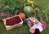 День садовода и огородника в Йошкар-Оле