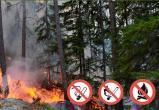В Марий Эл высока вероятность возникновения лесных пожаров