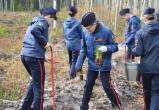 В Куярском лесничестве посадили «Лес Победы»