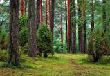 В Марий Эл переиздадут Красную книгу по грибам и растениям